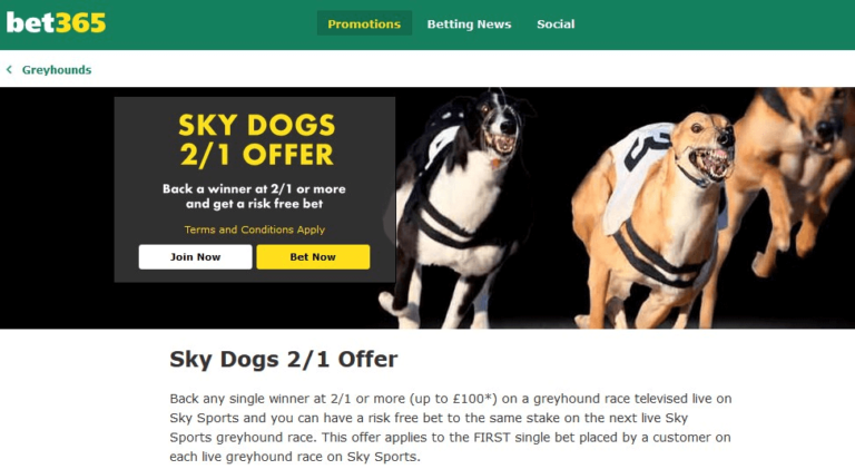 Bet365 Dog Race 2/1 Offer