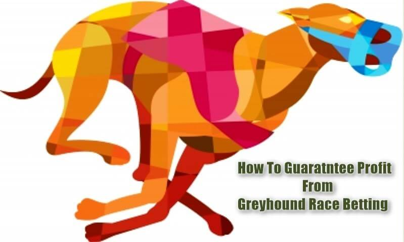 Greyhound Betting Strategy How To Lock-in Profit Feature