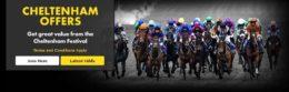cheltenham betting, bet365 offer