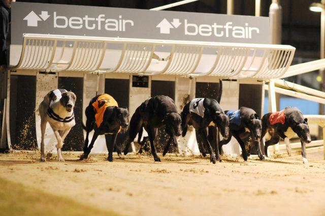 Greyhound betting system betfair redskins cowboys betting predictions